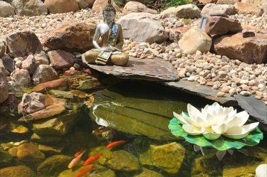 image lago buda peixes portantiqua gois